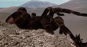 tarantula-giant
